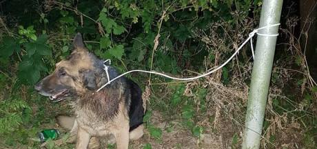 Dove hond met staar gedumpt en overleden