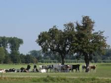 Provincie wil meer meer bomen op het Gelderse boerenland