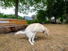 Gouda blijft bij hondenbelasting