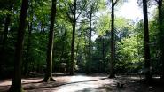 Staat door uw verhaal de 'boom van het jaar' in Buggenhout? Doe nu mee