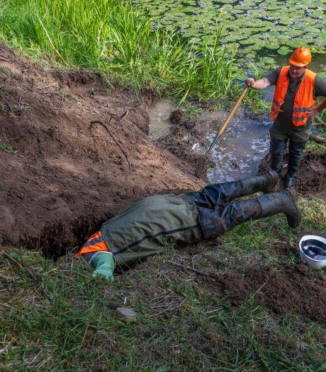 Overlast bevers: Waterschap gaat de dieren doden als 'laatste optie'