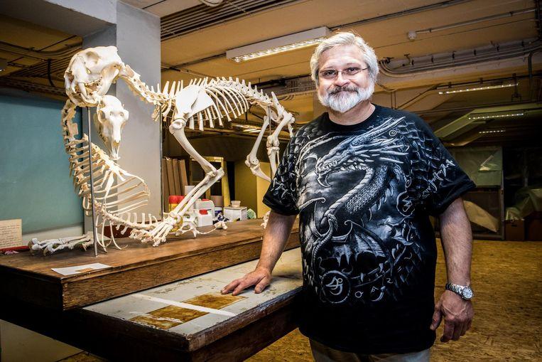 Conservator Dominic Verschelden kan zich nu toeleggen op onafgewerkte skeletten, zoals dat van de tijger met antilope in de muil.