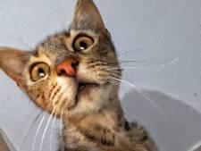 In Dinxperlo gevonden kat na 14 maanden terug bij baasje in Breedenbroek