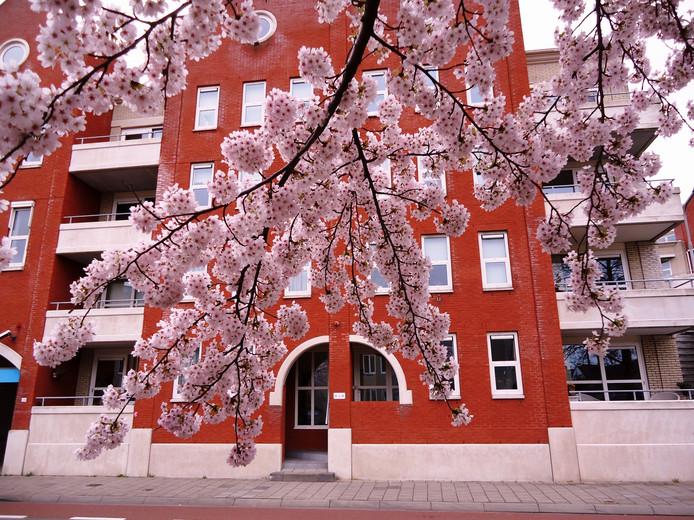lente plaatje met bloesem in volle pracht