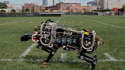 Robot-cheeta loopt op eigen kracht rond op campus MIT