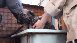 """Vrijwilligers zorgen voor honden in Tsjernobyl: """"Eén van de meest deugddoende ervaringen ooit"""""""