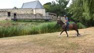 """Paardenevenement op Pietersheim: """"Voldoende water voor ruiters en hun dieren"""""""