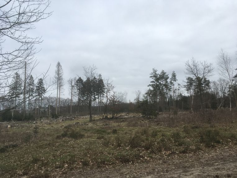 Lege plek in het Drent-Friese Wold.  Beeld Mac van Dinther