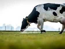 Boeren rond Overijsselse natuur dreigen vergunning voor uitbreiding veestapel kwijt te raken