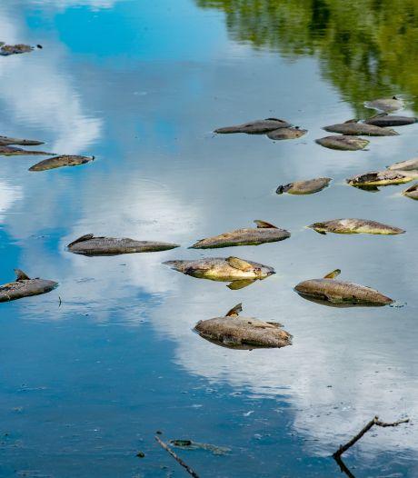 Duizend dode vissen bij 't Oude Slot in Veldhoven; onderzoek naar slib