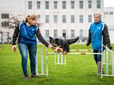Alphense Honden Club: 'We hopen dat de kantine klaar is als we ons 50-jarig jubileum vieren'