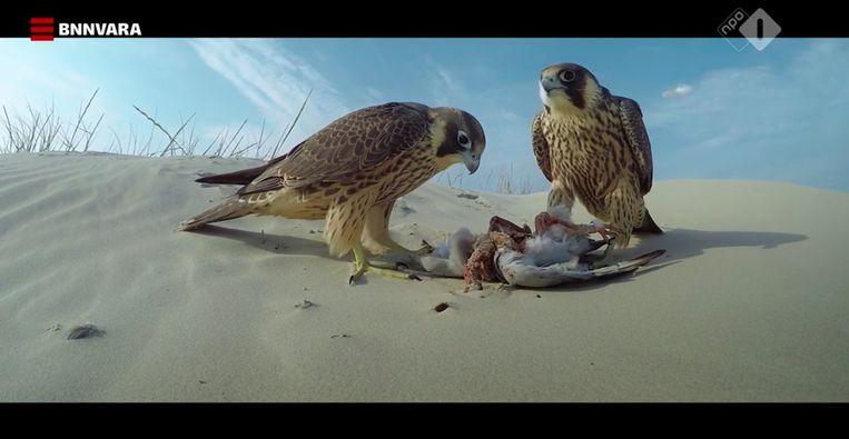 Ook op een zandbank in de Waddenzee geeft en neemt de natuur even ruimhartig als meedogenloos.  Beeld BNN Vara