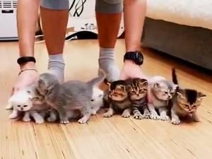 Poging om kittens te fotograferen gaat mis