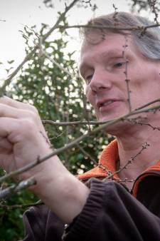 Met een loep op zoek naar vlindereitjes van een millimeter in Epe