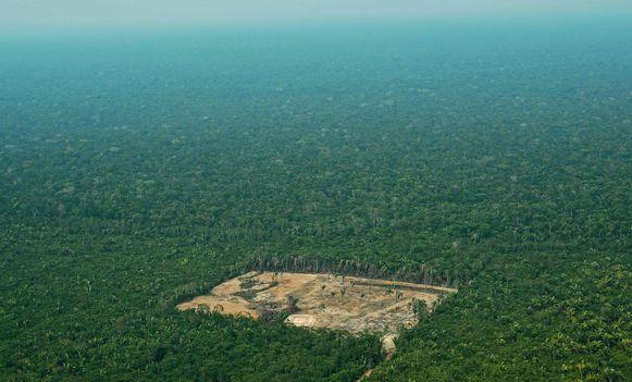 Sinds de extreem-rechtse president Jair Bolsonaro begin dit jaar aan de macht kwam, is gesnoeid in de middelen voor de strijd tegen de ontbossing.