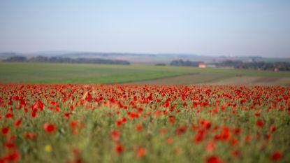 Herdenking gesneuvelde Royal Air Force-bemanningsleden geannuleerd