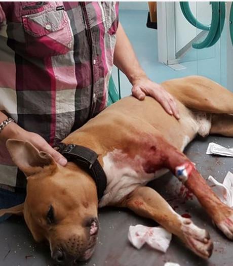 Hond tot bloedens toe aangevallen door bever in de Biesbosch
