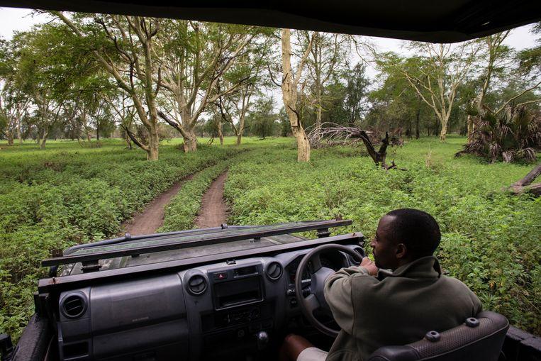Gorongosa National Park. Beeld Bram Lammers