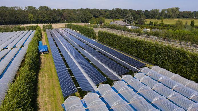 Proefproject met zondoorlatende zonnepanelen in Babberich. Maarten van Hoof uit Olland is dit ook van plan. Op de foto is het verschil goed zichtbaar tussen folie (onder) en zonnepanelen boven het fruit.