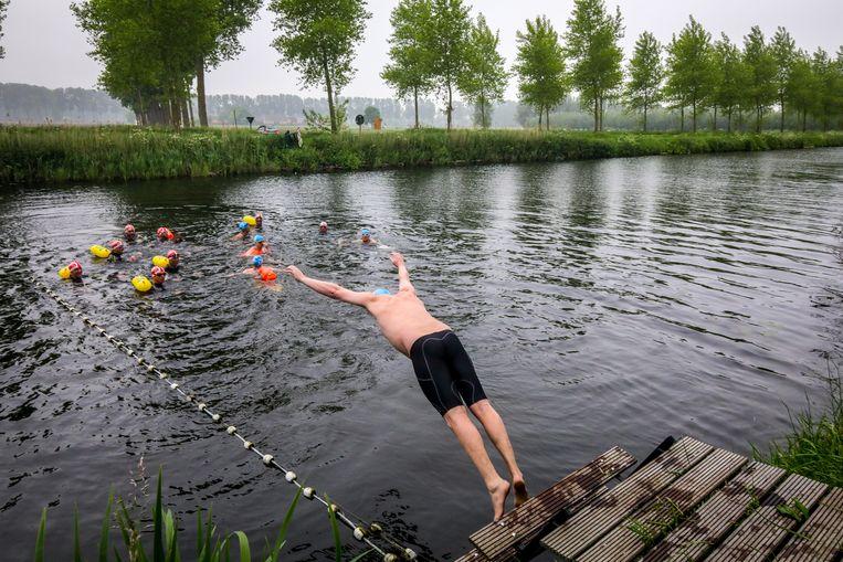 Het openwaterzwemmen in de Damse Vaart zal zonder de Zwarte Zwanen zijn.