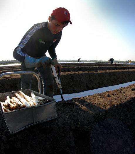 'Redelijk seizoen' voor aspergetelers in West-Brabant