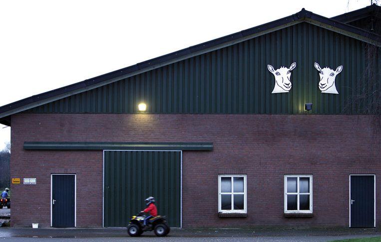 Een geitenhouderij in Schaijk. © anp Beeld