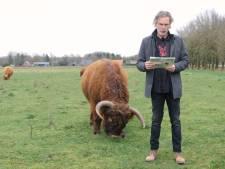 Boswachter beoordeelt: Columnist komt goed weg bij briesende Schotse Hooglander