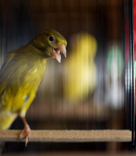 Vogeltjes waaien weg en schuilen op toilet