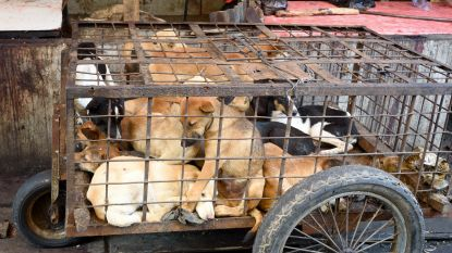 """""""Dit is broeihaard voor pandemieën"""": nieuwe richtlijnen, maar Chinezen blijven hondenvlees kopen"""