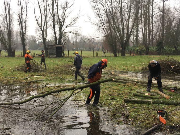 De knotvrijwilligers van het Regionaal Landschap Schelde-Durme aan het werk.