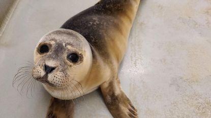Eerste - piepjong - zeehondje aangespoeld