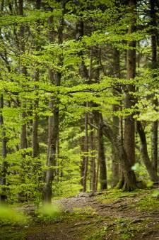 Eén biljoen bomen planten, dat lukt toch niet op tijd