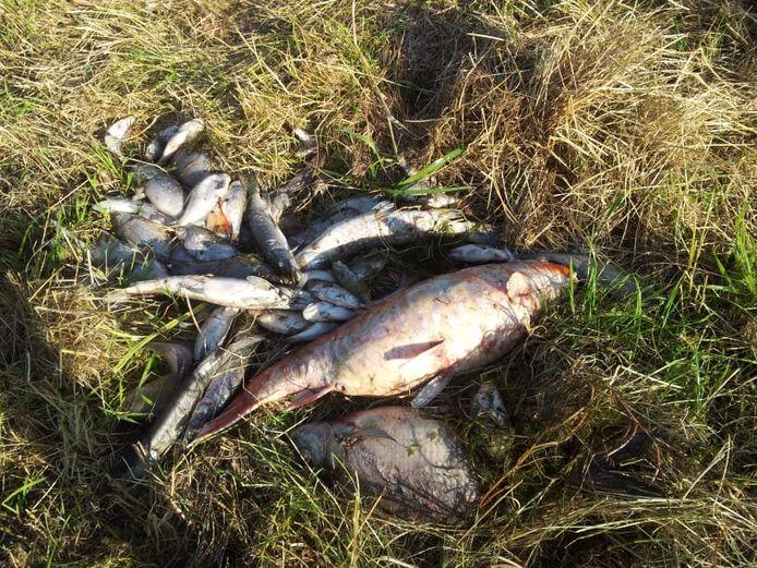 Meer dan honderd vissen werden gevonden volgens Joran.