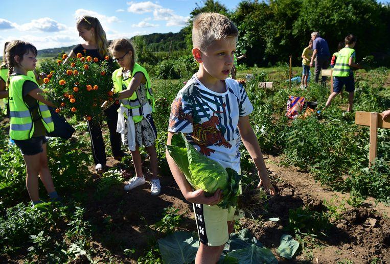 Leerlingen van de Nijmeegse basisschool De Wielewaal op de oogstdag van hun schooltuin.  Beeld Marcel van den Bergh