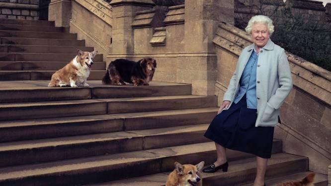 Hart van Britse Queen gebroken: geliefde Corgi vlak voor feestdagen overleden