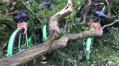 Nog de hele dag bomen ruimen voor Limburgse brandweer