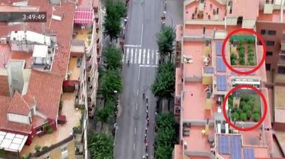 De Vuelta vanuit de lucht bekeken: helikopter spot cannabisplanten op dakterras