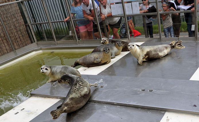 Voorlopig zijn er geen zeehonden en geen publiek in A Seal in Stellendam.