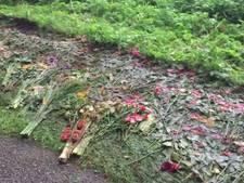 Tractor rijdt over bloemen van wake voor varkens in Agelo