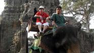 Cambodja verbiedt olifantenritten bij tempels Angkor Wat
