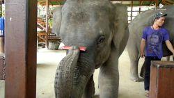 VIRAL: Talentvolle olifant speelt mondharmonica