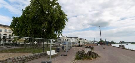 Grote ophef om te kappen reuzenkastanje langs IJsselkade in Zutphen, toch gaat de zaag erin