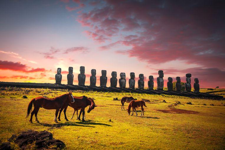 Paarden grazen op Paaseiland, vlakbij de beroemde beelden. Beeld