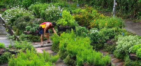40% des espèces végétales menacées de disparition