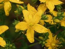 Smog en pollen zorgen voor hausse aan longklachten