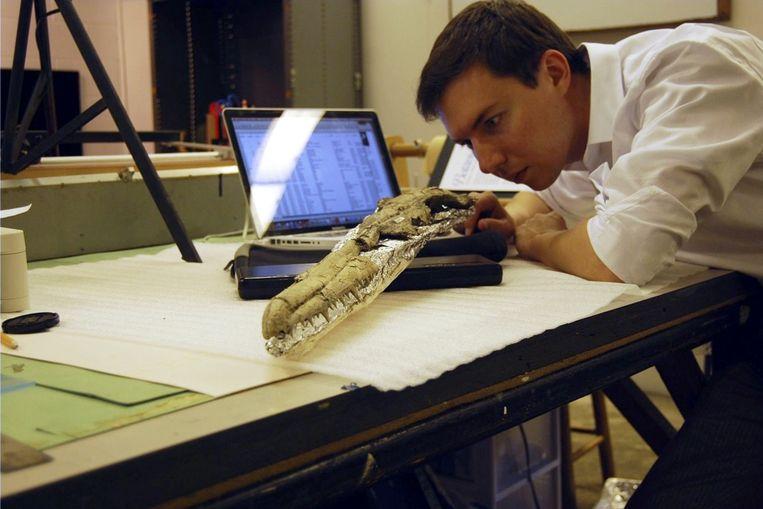 Daniel Ksepka bestudeert de schedel van de Pelagornis sandersi.