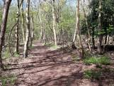 PvdA pleit voor boomvriendelijke gemeente