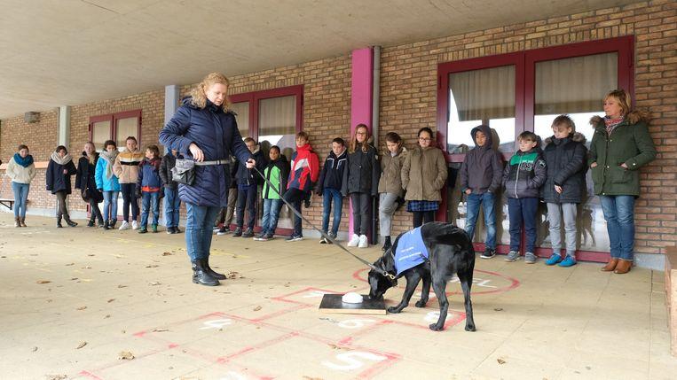 Basisschool De Kiekeboes kreeg bezoek van twee zogenaamde diabeteshonden.