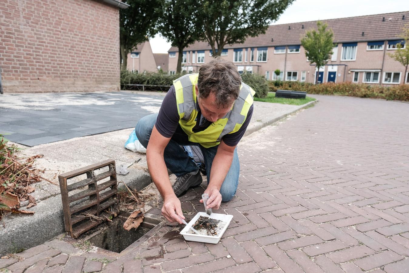 Een medewerker van de NVWA zoekt naar tijgermuggen in Westervoort.