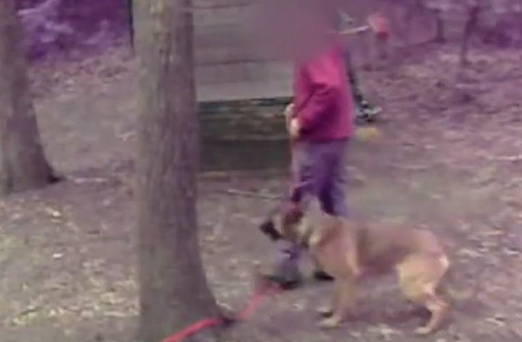 Beelden uit de uitzending. De honden worden hardhandig aangepakt.